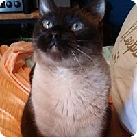 Adopt A Pet :: Biggs - Chicago, IL