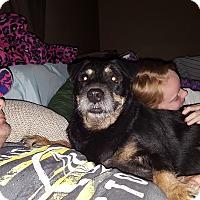 Adopt A Pet :: Mila - Gilbert, AZ
