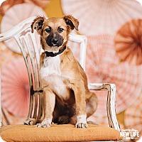 Adopt A Pet :: Yin - Portland, OR