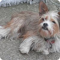 Adopt A Pet :: Ella - Clarksville, TN