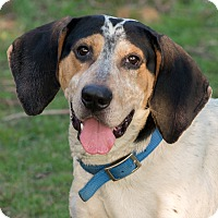 Adopt A Pet :: Winchester - Westfield, NY