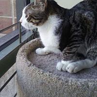 Adopt A Pet :: Caddy - LaGrange Park, IL