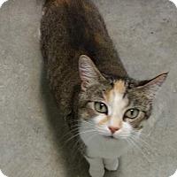 Adopt A Pet :: Baby Doll - Fort Scott, KS
