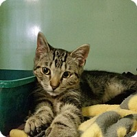 Adopt A Pet :: Moonbeam - Bloomingdale, NJ