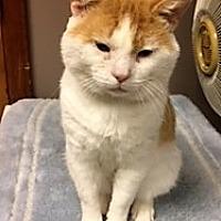 Adopt A Pet :: McLovins - Medina, OH