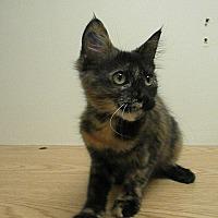Adopt A Pet :: Corolla - Milwaukee, WI