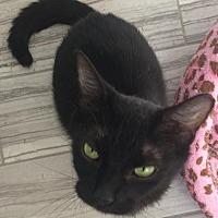 Adopt A Pet :: Ragu - Owings Mills, MD