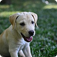 Adopt A Pet :: Sandy - Cumming, GA