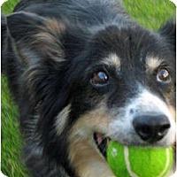 Adopt A Pet :: Wynn - Salt Lake City, UT