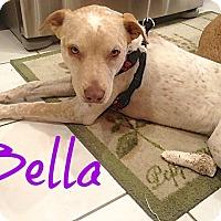 Adopt A Pet :: Bella Heeler - Scottsdale, AZ