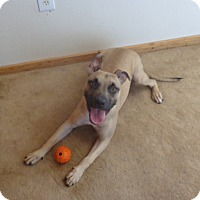 Adopt A Pet :: Ducky - Only $25 adoption! - Litchfield Park, AZ
