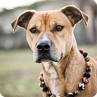 Adopt A Pet :: Madame - Arlington, TX