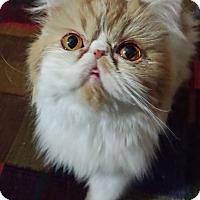 Adopt A Pet :: Precious Prada - Columbus, OH