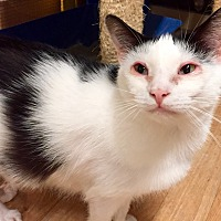 Adopt A Pet :: Sorento - Wilmington, DE