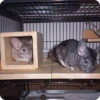 Adopt A Pet :: Jake (NM) & Sandy (F) - Avondale, LA