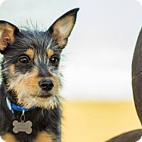 Adopt A Pet :: Slim - Georgetown, KY