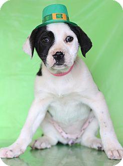 Labrador Retriever Mix Puppy for adoption in Waldorf, Maryland - Yaya