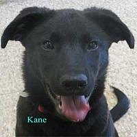 Adopt A Pet :: Kane - Warren, PA