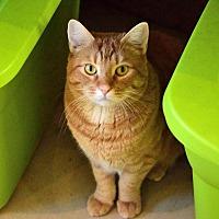 Adopt A Pet :: Garfield - Palo Cedro, CA