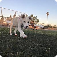 Adopt A Pet :: Fendi - San Jose, CA