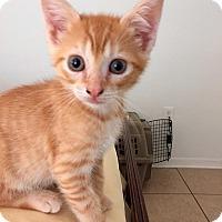 Adopt A Pet :: Bowie - Tampa, FL