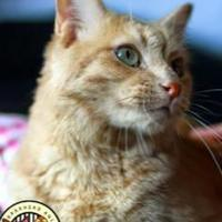 Adopt A Pet :: Buddy - Spruce Grove, AB