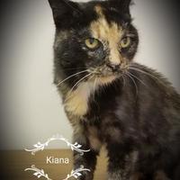Adopt A Pet :: Kiana - Twinsburg, OH