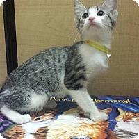 Adopt A Pet :: Naomie - Whittier, CA