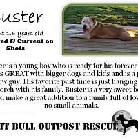 Adopt A Pet :: Buster - Lafayette, OR