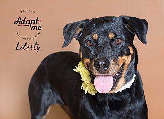 Adopt A Pet :: Lliberty  - Houston, TX