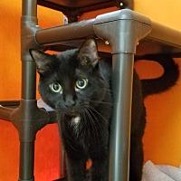 Adopt A Pet :: Oddball - Elyria, OH