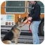 Photo 3 - German Shepherd Dog Dog for adoption in Los Angeles, California - Dodger von Dillenburg
