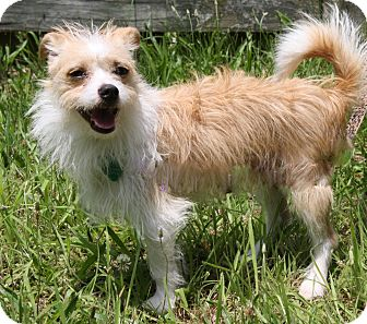Terrier (Unknown Type, Small) Mix Dog for adoption in Forked River, New Jersey - Baby