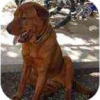 Adopt A Pet :: Houdini - Bethesda, MD