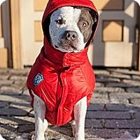 Adopt A Pet :: Chip - Reisterstown, MD