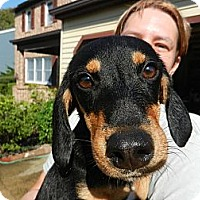 Adopt A Pet :: Shelby - South Jersey, NJ