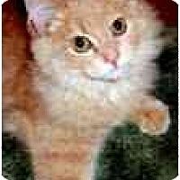 Adopt A Pet :: Cinnamon - Arlington, VA