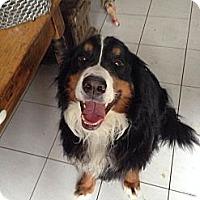 Adopt A Pet :: Sampson - Westtown, PA