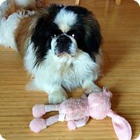Adopt A Pet :: Coltrane - Richmond, VA