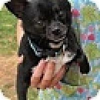 Adopt A Pet :: Cy - Kingwood, TX