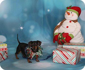 Dachshund Dog for adoption in Las Vegas, Nevada - Henry