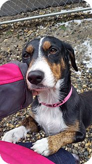 Beagle Mix Dog for adoption in Freeport, Maine - Sasha *Lovebug!*
