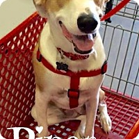 Adopt A Pet :: Piper - Scottsdale, AZ