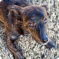 Adopt A Pet :: Crumpet - Knoxville, TN