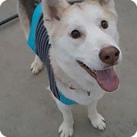 Adopt A Pet :: Squirrel - Apple valley, CA