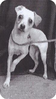 Chihuahua Mix Dog for adoption in Spokane, Washington - Sophie