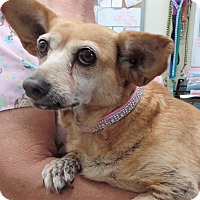 Adopt A Pet :: CARINA - Inland Empire, CA