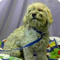 Adopt A Pet :: Clive Durante - Seattle, WA