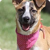 Adopt A Pet :: HEIDI - Poway, CA