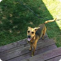 Adopt A Pet :: Gracie - Tillamook, OR